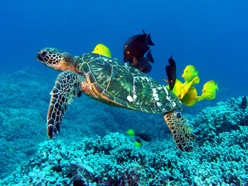 Information about sea turtles.