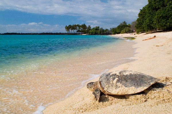 Turtle On Tropical Beach