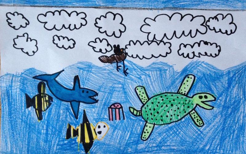 Apreciación cultural hacia las tortugas marinas.