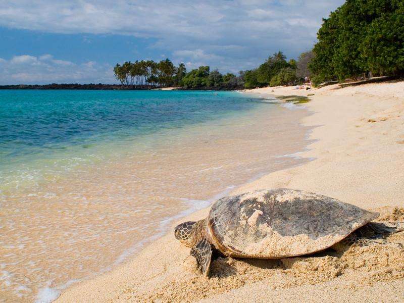 Tortugas Marinas y Calentamiento Global