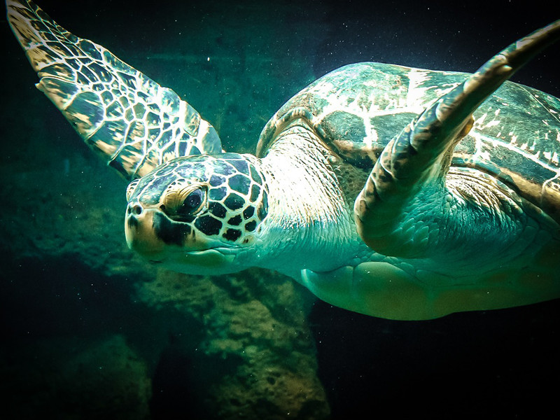 Sea turtle conservation.