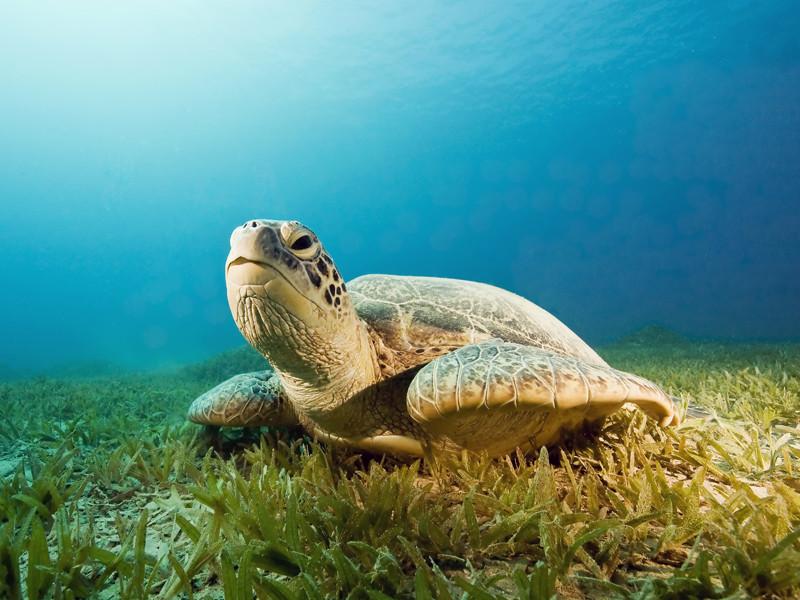 Tortugas Marinas Datos