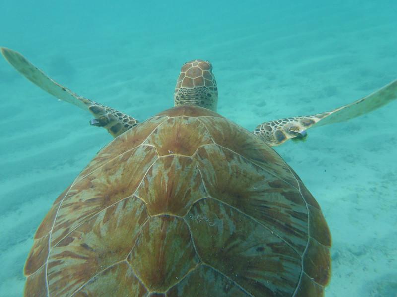 Evolución de las Tortugas Marinas