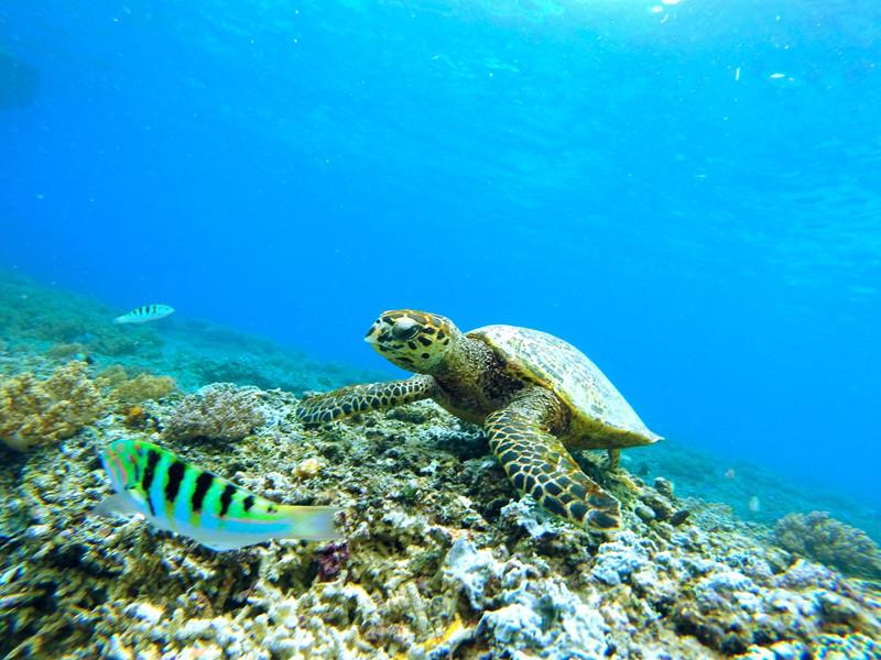 Natural environment of sea turtles.