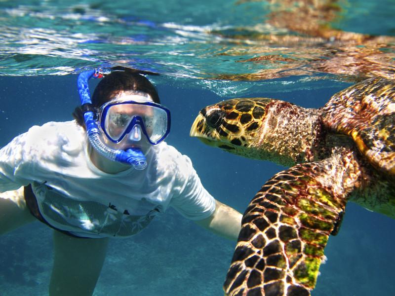 Tortugas Marinas y Seres Humanos