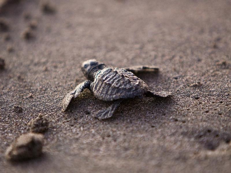 Investigación sobre las Tortugas Marinas