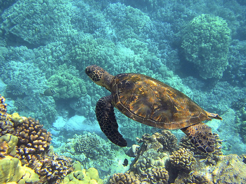 Sea Turtle Habitat