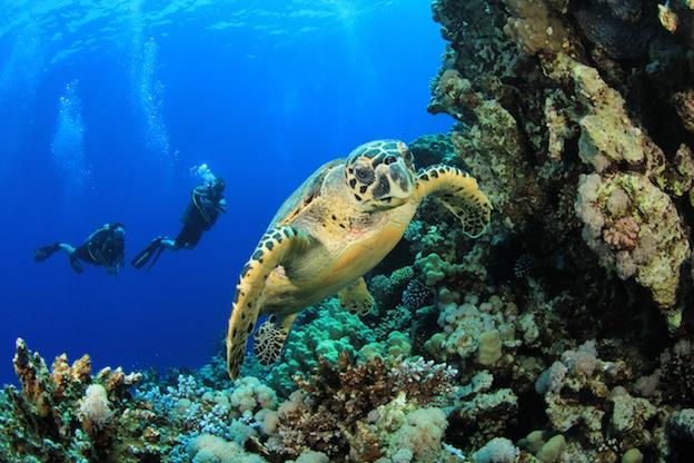 Hawksbill Sea Turtle Habitat Map Sea turtle distribution