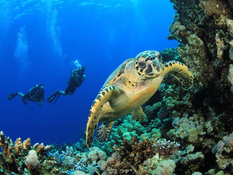 Sea turtle distribution.