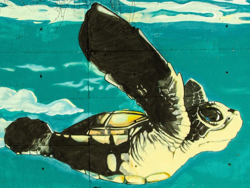 Sea Turtles in Culture