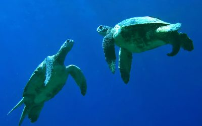 Sea Turtle Social Structure