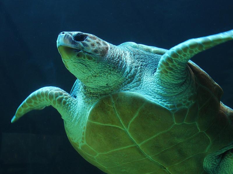 Especies de Tortuga Marina