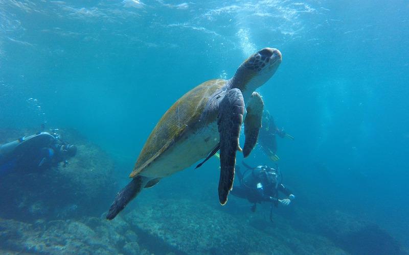 Relación entre humanos y fauna marina.